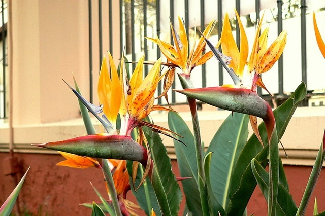 Nejoblíbenější pokojové rostliny. Máte některé z nich?