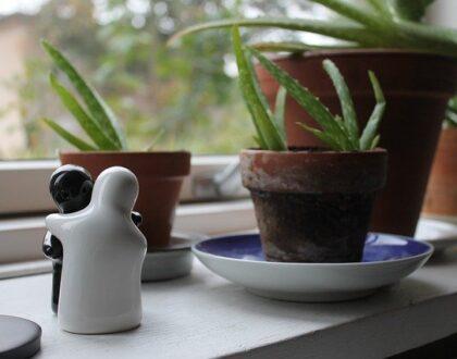Aloe vera - pomocník v domácnosti. Jak ji pěstovat a jak ji využít
