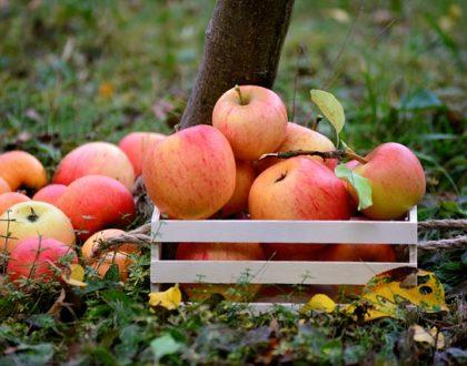 Jak správně uskladnit jablka