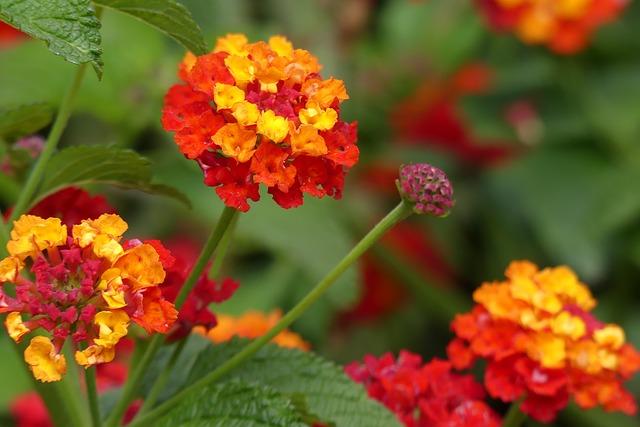 Nejhezčí balkonové květiny