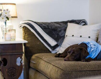 Pes v bytě - na co nezapomenout