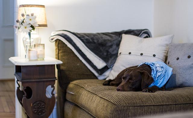 Pes v bytě – na co nezapomenout
