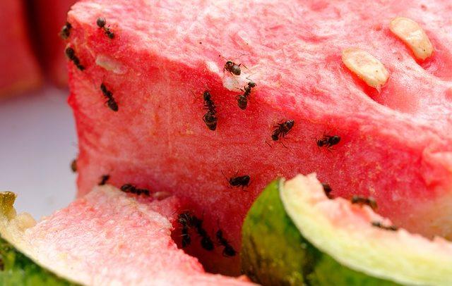 Jak vyzrát na mravence