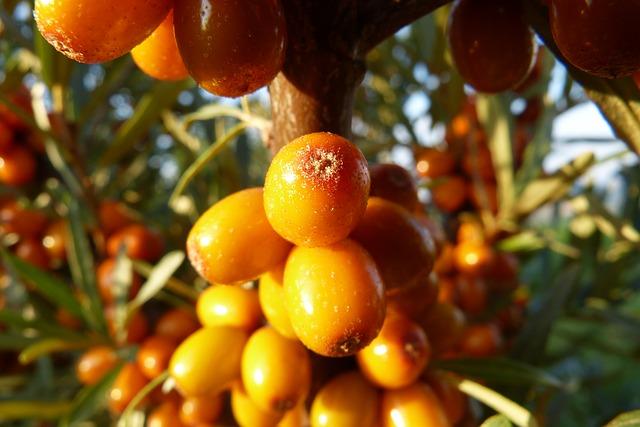 5 potravin bohatých na vitamín C, které prospějí vašemu zdraví