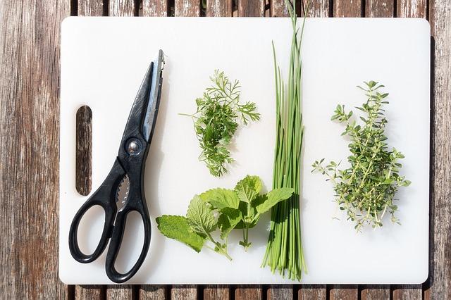 Jaké bylinky pěstovat v dubnu